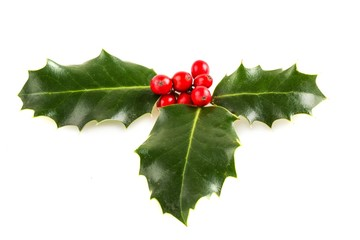 Holly, Christmas, Holiday.