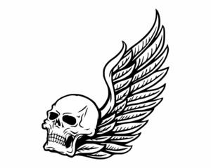 skeleton bone skull fly