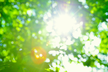 Beautiful Fresh Green Leaves against the Sun