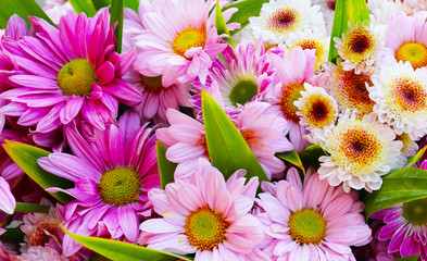 Colourful Flowers as Background Uses.