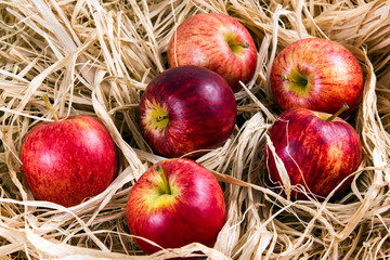 Fresh Juicy Rustic Red Apples on Straw