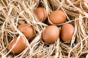 Fresh Chicken brown organic eggs on straw