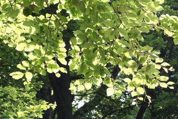 Grüne Blätter in den Sonnenstrahlen