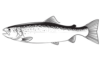 Drawing fish, vector