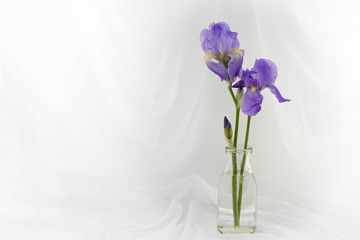Two Purple Iris Flowers In A Jar