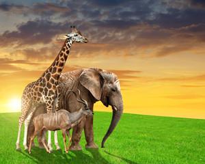 Giraffe, elephant and kudu in the sunset
