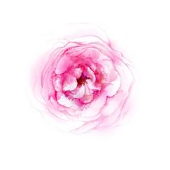 Pink tea rose blossom. Watercolor image vector.