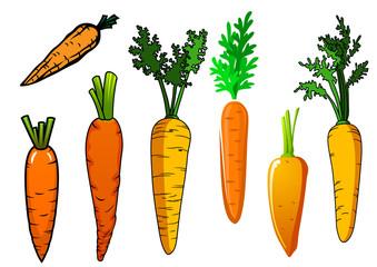 Fresh isolated orange carrot vegetables