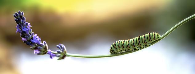 butterfly e flower