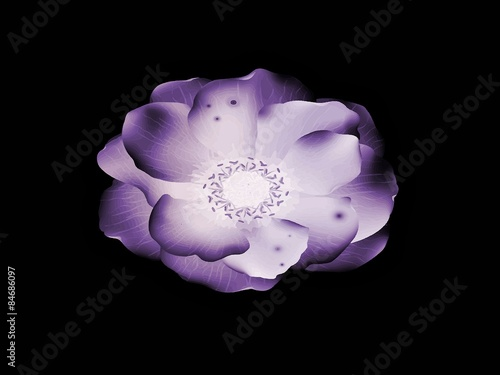 Fleur Violette Dessin Stock Photo And Royalty Free Images On