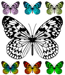 Butterfly vector template with samples. Easy editable wings colo