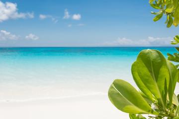 Printed kitchen splashbacks Cocktail blue sky with beach sea and leaf