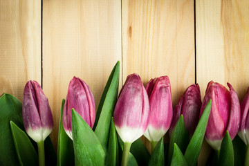 Tulips on a wooden background. Copy space
