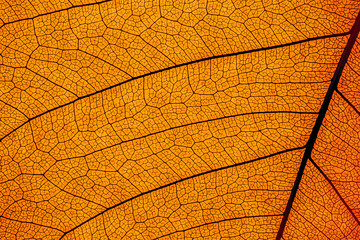 leaf structure macro detail