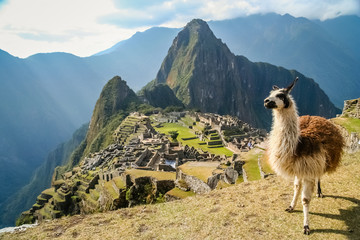 Photo sur Plexiglas Lama Lama And Machu Picchu