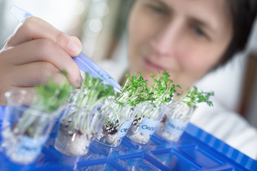 Female scientist or tech picks a cress sprout from a test jar