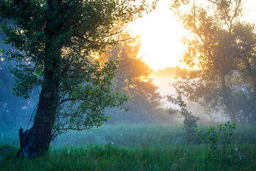 early morning in forest