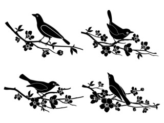 Wall Mural - Birds on branches. Vector silhouettes