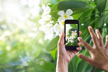 Taking pictures white flower with mobile smart phone