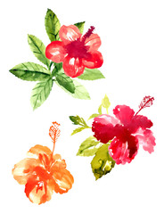 Collection of watercolor hibiscus flowers
