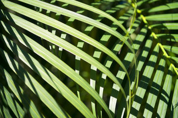 Bright Green Tropical Palm Frond Background