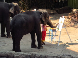 elephant is drawing a picture