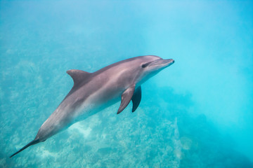 Dolphin under water