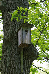 birdhouse in a tree among the leaves.
