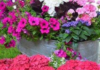 Sommerblumen in Zinkwanne