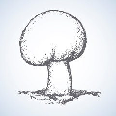 Agaricus. Vector drawing