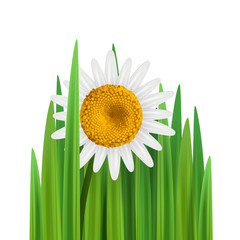 Grass with daisy flower vector illustration with empty space square