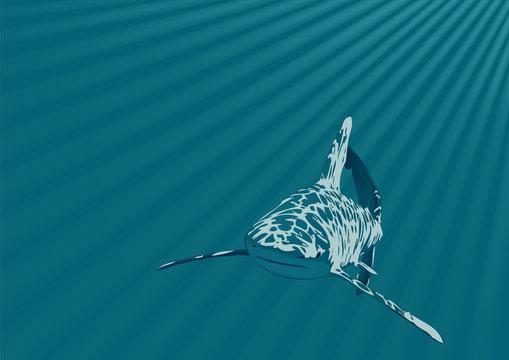 Shark in an ocean