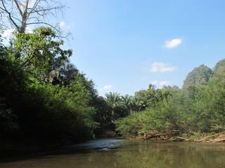 Таиланд тропики