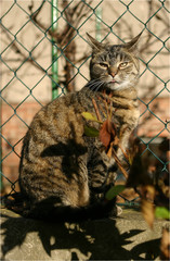 Cat and it¨s surorunding