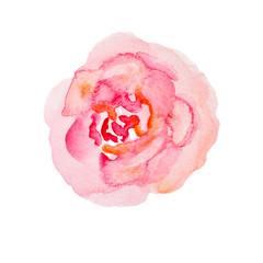 Watercolor flower. Pale pink peonies watercolor illustration