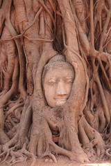 The head of the sandstone budha head lying beneath a Bodhi tree beside the Minor Wihans, Wat Phra Mahathat Ayuthaya Historical Park, Ayuthaya (Ayutthaya)
