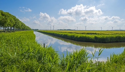 Foto op Canvas Kanaal Canal through a rural landscape in spring