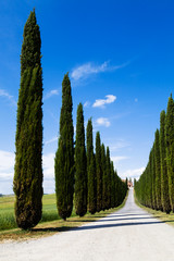 Wall Mural - Idyllic Tuscan landscape with cypress alley near Pienza, Vall d'