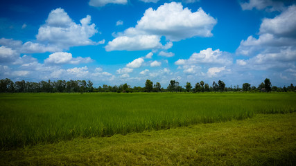 farm,background,color,nature,house,wall,green,sky