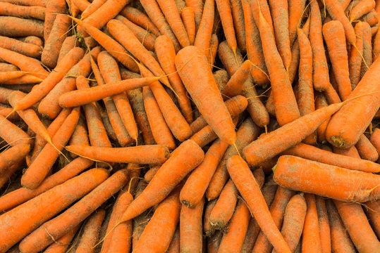 Viele Karotten mit Sand liegen durcheinander in der Auslage zum Verkauf