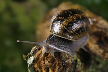 Snail sliding on a branch