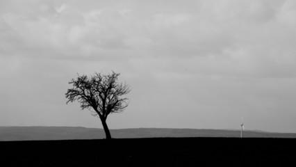 einsamer Baum #2