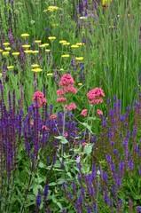 Bunten Blumen im Sommergarten