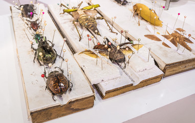 Collection of beetle butterfly wasps and insects in general