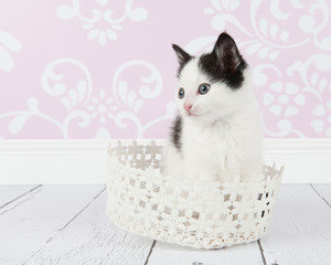 Black and white young cat kitten in a white basket at living room setting with pink baroque wallpaper