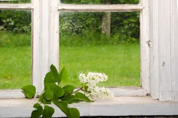 White lilacs decoration