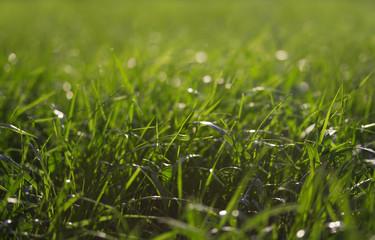 Зеленая трава против солнца