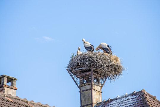 Störche auf einem Dach