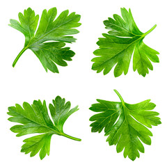 Parsley. Leaves isolated on white. Collection.