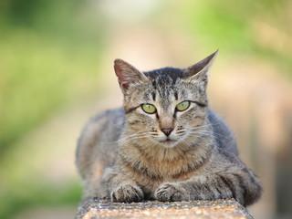 見つめるのら猫
